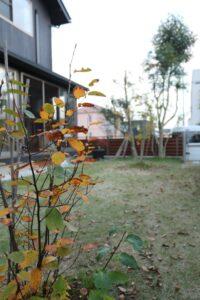 つくばの庭付き一戸建ての落ち葉のある庭